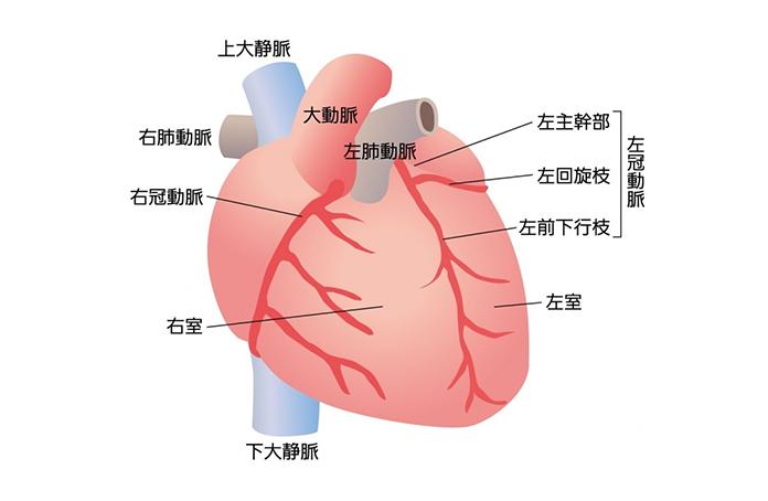 図1 冠動脈